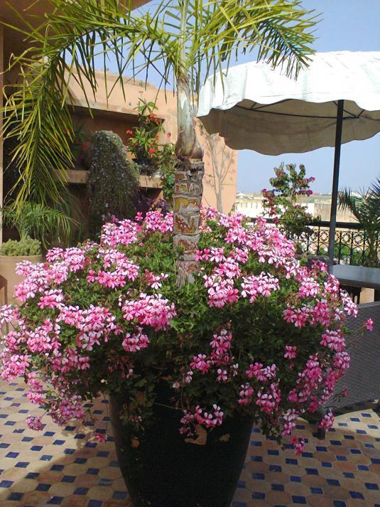 Bloemen, planten, SUN,... :)