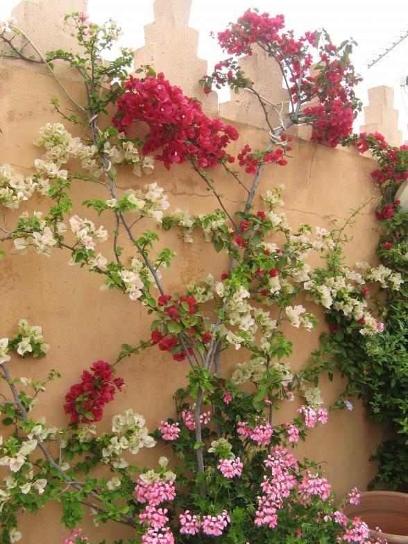 Mooi mooi al die bloemen